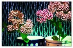 still life_theme-045_001 (kazimierz.pietruszewski) Tags: stilllife colorful cups flowers