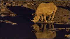 _SG_2016_05_Namibia_0064_IMG_1089 (_SG_) Tags: auto africa park trip elephant tree water car nationalpark wasser solitude desert hole national rhino afrika giraffe ausflug elefant namibia herd baum rhinoceros strauch etosha watering wateringhole elefanten 2016 nashorn einde giraffen etoshanationalpark standpost wasserstelle etoshapark elefantenherde giraffenherde giraffesherd