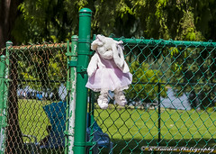 Bad Bunny (R. Sawdon Photography) Tags: rabbit bunny stuffedtoy pink fence unloved