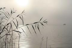 IMG_0386 (4ph) Tags: wood morning blackandwhite bw lake water fog forest sunrise reeds early blackwhite noiretblanc nb noirblanc blakckwhite