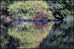 _DSC3934 (startowa13) Tags: nyc fall nature zeiss centralpark sony 13518 zeiss135mmf18 a7s