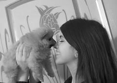 bear2 (tellez_victoria) Tags: bear cute girl puppy toy kiss laugh pomeranian puppylove