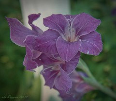 flower18 (aburayyan) Tags: flowers plants macro beautiful garden bay nikon df singapore wildlife fullframe nikkor fx