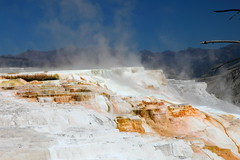 Canary Spring IMG_9542 (SunCat) Tags: travel vacation hot all mammoth springs trips yellowstone wyoming 2014