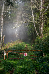 No Trespassing (stephencurtin) Tags: california trees coast foggy coastal thechallengefactory