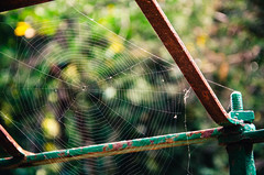 LNW - Local Narrow Web (Walimai.photo) Tags: metal de spider nikon bokeh web salamanca araa tela 18105 elbosque bjar d7000