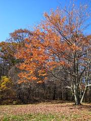 Last Month's Color (tcpix) Tags: fall virginia foliage blueridgeparkway