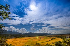 Rice Country #Golden paddy (Allen_2 ll YA_ ) Tags: travel field countryside tour rice paddy farm country harvest journey hualien ricepaddy township paddies   terraced   fuli       fragrantrice              ricecountry