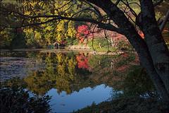 Ryoan-ji, Kyoto (livia.com) Tags: autumn japan garden maple kyoto acqua autunno giappone aceri