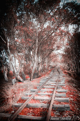 Like in the movie (Twilight ) (Vanressa Fundar) Tags: nikon italia natura stazione sicilia binari d90 abbandonata
