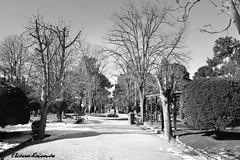 Άλσος Κηφισιάς (Eleanna Kounoupa) Tags: park trees blackandwhite snow landscape grove greece ελλάδα δέντρα τοπίο χιόνι kifissia blackwhitephotos πάρκο κηφισιά hccity άλσοσκηφισιάσ μαυρόασπρεσ