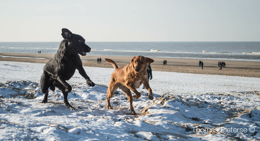 The Worlds Best Photos Of Noordwijk And Snow Flickr Hive Mind