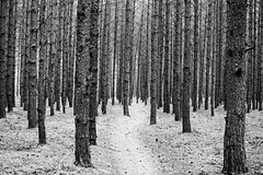 Forest (deniss.kaibagarovs) Tags: blackandwhite black tree nature forest relax scary outdoor adventure jurmala
