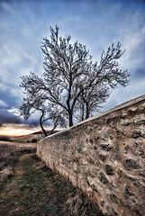 Sunset in Uruea (Palentino) Tags: sunset naturaleza tree muro nature wall landscape arbol atardecer stones valladolid campo piedras castilla uruea