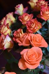 DSC_1526 Roses (PeaTJay) Tags: flowers roses plants macro nature rose gardens fauna reading flora sigma indoors micro closeups berkshire rosebuds lowerearley nikond750