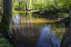Reflections in Moran, Jrna (Madde Elg) Tags: reflection spring stream vr srmland jrna spegling moran