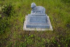Little Lamb (Xynalia) Tags: california ca plants nature cemetery statue dead death flora child sad tombstone foliage lamb marincounty