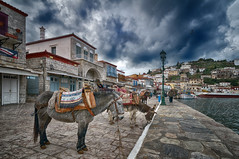 -Piazza (Dimitil) Tags: sea animals islands hellas greece tradition greekislands hydra saronic attica saronicgulf saronikos ydra hidra idhra argosaronikos traditionalsettlements
