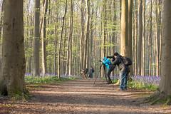 Hallerbos 2016 (vanderaalstfotografie) Tags: flowers forest sunrise golden nikon purple hour bos gouden halle bloemen hyacinth d800 paars hallerbos lightray hyacint zonsopkomst uurtje