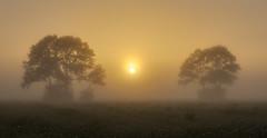 Bisection (zebedee1971) Tags: trees orange sun sunlight grass fog sunrise dawn farm foggy calm farmland serene natureandnothingelse