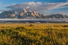 Sunrise Antelope Flats (greggohanian) Tags: clouds meadow wildflowers grandtetons tetons antelopeflats