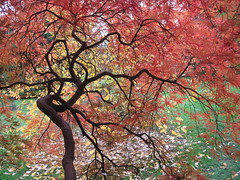 Autumn Colours (karvainen kana) Tags: autumn red orange colour tree nature leaves yellow happy day branch colourful fathersday nationaltrust fathers happyfathersday ruby10 ruby5