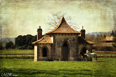 Antiquity (maureen bracewell) Tags: horses france texture field sunshine countryside spring ancient chapel historic provence stchristophe