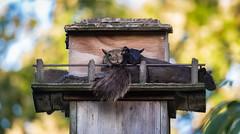 Family Photo (hey its k) Tags: ca ontario canada nature backyard squirrels wildlife hamilton tamron canon6d 150600mm
