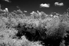 Gulf State Park Marsh (Howell Weathers) Tags: trees blackandwhite nature water monochrome clouds ir outdoor alabama infrared marsh gulfstatepark