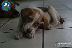 DSC08181 (OrgNicAmb) Tags: dogs perros nicaragua refugio mascotas masaya peluditos recataditos casahogarlucito orgnicamb