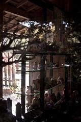 Omiyage (Charmarmar) Tags: sanfrancisco park lighting travel nature shop 35mm garden japanese golden nikon gate san francisco natural tea sfo souvenir omiyage d5000 charmarmar nikontop