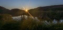 Morning (lizcaldwell72) Tags: water sky hawkesbay newzealand sunrise pekapekaswamp light