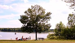 A Tree with a Personality (Haytham M.) Tags: sky tree green beach water grass bench sand picnic outdoor shore 18200mm canont4i
