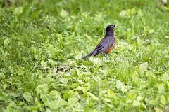 IMG_4608eFB (Kiwibrit - *Michelle*) Tags: tree grass birds woodpecker squirrel maine feeder chipmunk monmouth 2016 061916