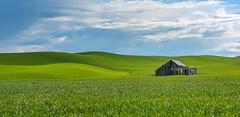 The Middle of Nowhere (llabe) Tags: abandoned building wheatfields wheat palouse easternwashington washington nikon d750