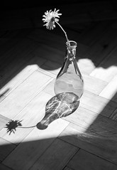 flower in vase bnw (cathbooton) Tags: canonusers canoneos floor wooden indoor shadows sunshine vase nature flower bnw blackandwhite 50mm canon reflection art summer photography sun shade