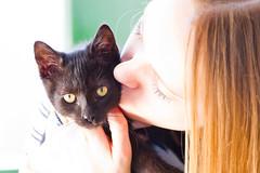 IMG_3419 (BalthasarLeopold) Tags: pet cats pets animal animals cat blackcat mammal kitten feline dof kittens felines blackcats indoorcat dephtoffield