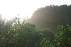 DSC01947 (numb3r) Tags: belize btb belizetourism wildlife rainforest mayan temples jungle belizezoo placencia belizecity authenticbelize tapir tucan