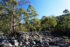 20160627-20-Scree field on Wellington Falls track (Roger T Wong) Tags: outdoors rocks walk australia hike scree tasmania hobart mtwellington bushwalk tramp 2016 wellingtonpark dolerite disappearingtarn sony2470 rogertwong sel2470z sonyfe2470mmf4zaosscarlzeissvariotessart sonya7ii sonyilce7m2 sonyalpha7ii