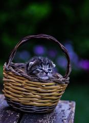 Metro Goldwyn Mayer (Angelo Petrozza) Tags: kittens gatti gattini cats bokeh focus animals animali cuccioli pentax cesto nest