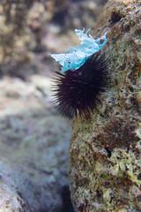 Man made (Peter Zabukovnik) Tags: sea plastic urchin