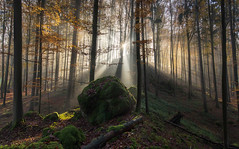 Lothlórien (@hipydeus) Tags: autumn forest bayern bavaria woods herbst lordoftherings rays wald sonnenstrahlen
