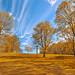 Gold Meadowlark Gardens - HDR
