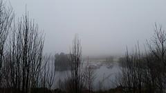 Loch Lomond (Michel Curi) Tags: greatbritain britain uk unitedkingdom scotland glasgow hogmanay holiday travel vacation christmas newyears ardrhu lochlinnhe greatglen highlands westernhighlands onich fortwilliam connel oban glenfinnan highland westernhighland loch lochmudle iverlochey castle iverlocheycastle lochleven a82 lochlomond inversnaid lochaber fog visitscotland lovescotland scotspirit similarity