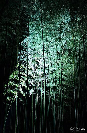 嵐山花燈路-竹林之道06.jpg