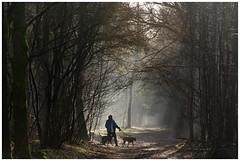 Into the light (stevefge) Tags: trees light people sunlight dogs netherlands woods nederland limburg mookerheide heumen nederlandvandaag