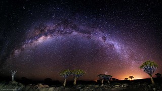 Milky Way Aglow  on Quiver Tree Forest