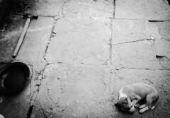 (floydianalost) Tags: street brazil blackandwhite bw dog pet pets white black art dogs branco brasil photoshop dark artwork flickr all foto shadows sad amor side sombra pic photographic preto follow pinhole fortaleza scape pretoebranco peb bew aa amador followme raiz coment picpets followyouback