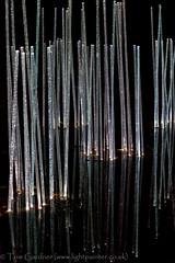 Botanic Lights 2014 (tomgardner) Tags: city uk greatbritain night lights scotland town edinburgh europe european unitedkingdom britain capital illuminations scottish colored british coloured botanicgardens lothian