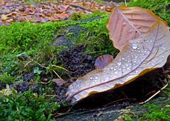 Autumn Textures (g crawford) Tags: glasgow potd glen pictureoftheday crawford herald ayrshire northayrshire westkilbride kirktonhall kirktonhallglen